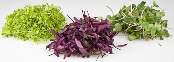 Are these vegetables made for Fraggles? From: http://marxfood.com/how-to-use-microgreens/