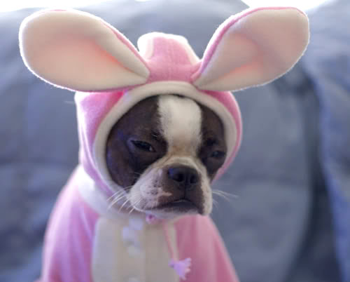 http://www.wannasmile.com/2013/03/happy-easter-from-a-boston-terrier-in-a-bunny-suit/