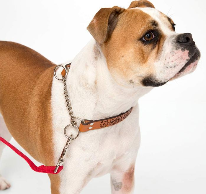 http://www.globaldogcompany.com/Shop/product/bark-busters-leather-training-collar