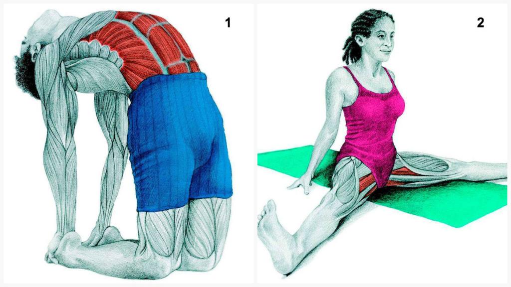 Potpourri: Nutrition Comparisons, Muscle Stretching Guide & AML SlackTeam