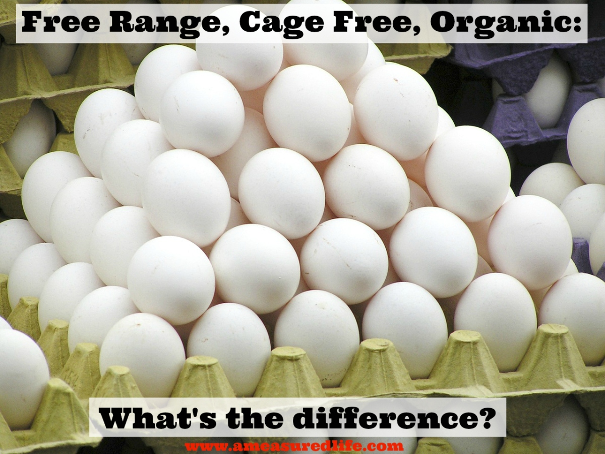 Eggs: Free Range, Cage Free, Organic – What Do They All Mean?